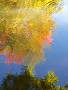 Autumn Abstract 2