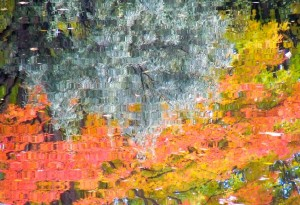 Autumn Abstract 22