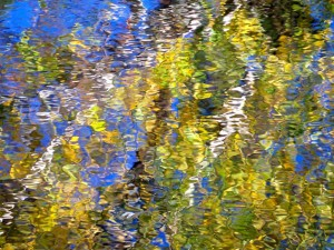Autumn Abstract 36