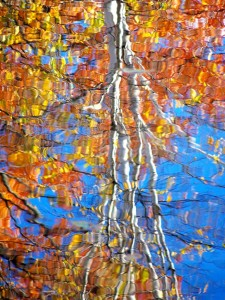 Autumn Abstract 41