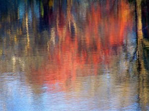 Autumn Abstract 54